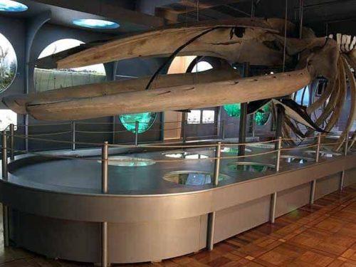 Херсонський музей природи відзначив 112 років