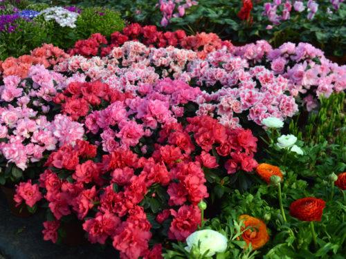 Поради Держпродспоживслужби: як обрати квіти до свята