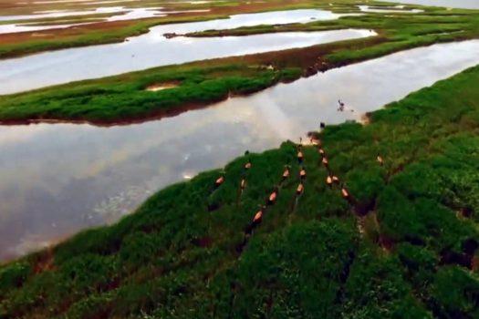 Півострів Бірючий, що на Азовському морі, відкрито для туристів
