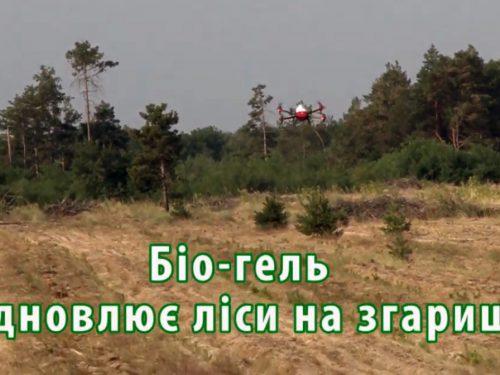 Біо-гель відновлює ліс на згарищі
